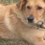 Au găsit un câine înghețat pe câmp și au început să plângă când au văzut ce ascunde