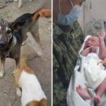 Câinele erou! A salvat de la moarte un bebeluș abandonat la gunoi