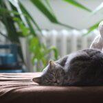 De ce torc pisicile. 5 motive să ai una acasă